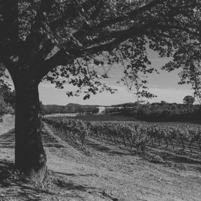 AOP Côtes de Provence